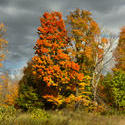 13051   fall foliage