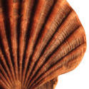 11815   Shell