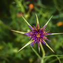 16773   Flower