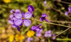 16774   Flower
