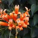 17130   flower