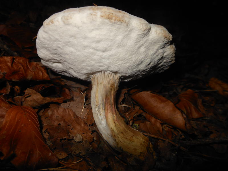 <p>Norfolk UK wild mushrooms found in November</p>