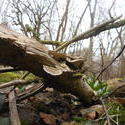 12488   forest mushroom 5