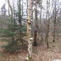 12490   forest mushroom 7