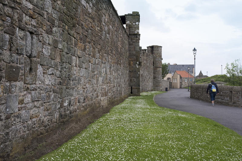 Tourist walking past wall and short grass with white flowers of Saint Andrews Cathedral in Scotland