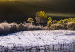 12087   frosty grass