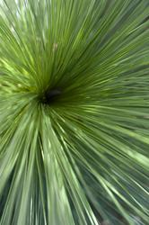 12659   Close up overhead view of outdoor bundle of grass