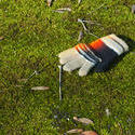 12081   knitted glove on mossy grass