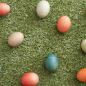 13486   Easter eggs on grass