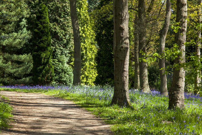 <p>A path through a Bluebell Wood in Surrey, England</p>