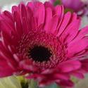 16880   Pink flower