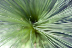 12660   Top down view on plant leaf fronds