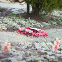 16841   Poppy wreath at a World War One and Two memorial