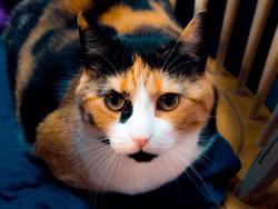 12109   pretty kitty