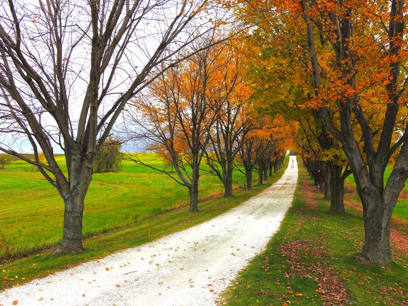 <p>Autumn foliage with trees lining a dirt road leading to the horizon with bright, green grass on an overcast morning.&nbsp;</p>