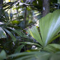 12662   Various lush tropical leaves and tree trunks