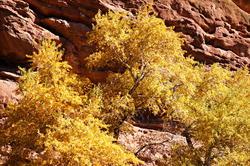 16120   Red Rocks Park Autumn Colors