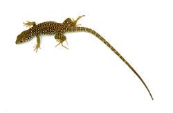16828   Reptile