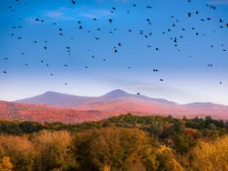 13046   the birds