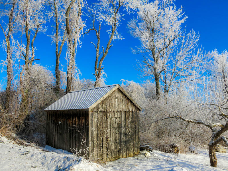 <p>Weathered wooden shed in the sub-zero Winter with frozen trees and snow on the ground and a brilliant blue, cloudless, morning sky in Randolph Center, Vermont.</p>