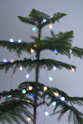 13163   Sparkling round Christmas lights on a natural tree