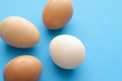 13036   Four fresh raw hens eggs on blue