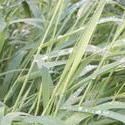 12580   wet grass