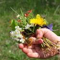 13074   wildflowers