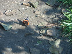 12607   woodland butterfly 1