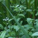 12597   woodland closeup 1