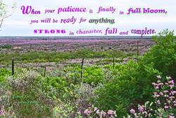 17479   Patience in Full Bloom