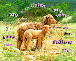 17509   My Sheep Follow Me