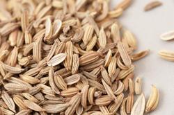 17234   Macro view of loose dried caraway seeds