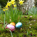 17335   Chocolate Easter eggs on ground among flowers