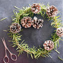 17282   Homemade Christmas wreath with pine foliage
