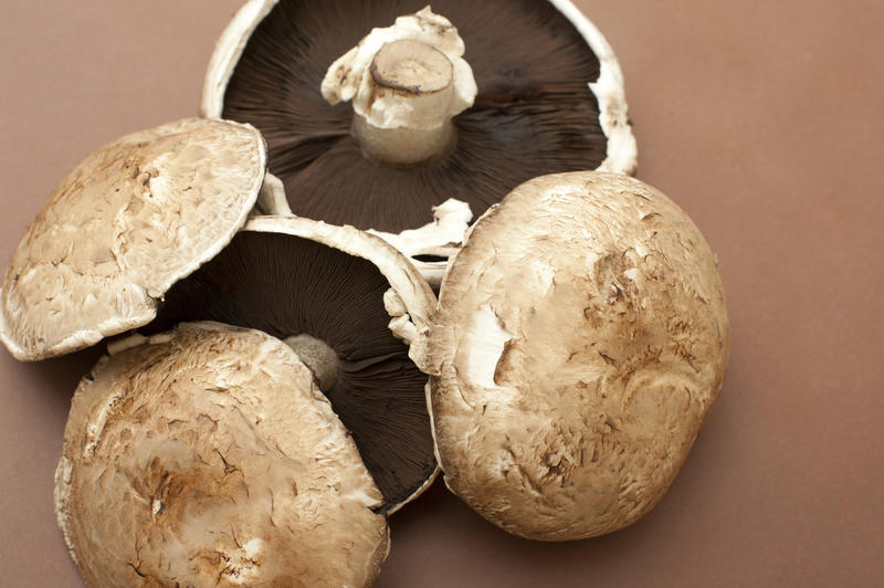 Large fresh raw portobello mushrooms on a brown background for a delicious savory cooking ingredient