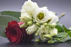 17327   Red rose