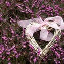 17353   Beautiful wicker heart on blooming heather