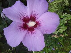 17560   Blooming