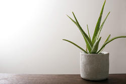 17384   Potted aloe vera plant on a wooden table