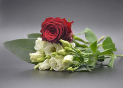 17326   Red and white roses