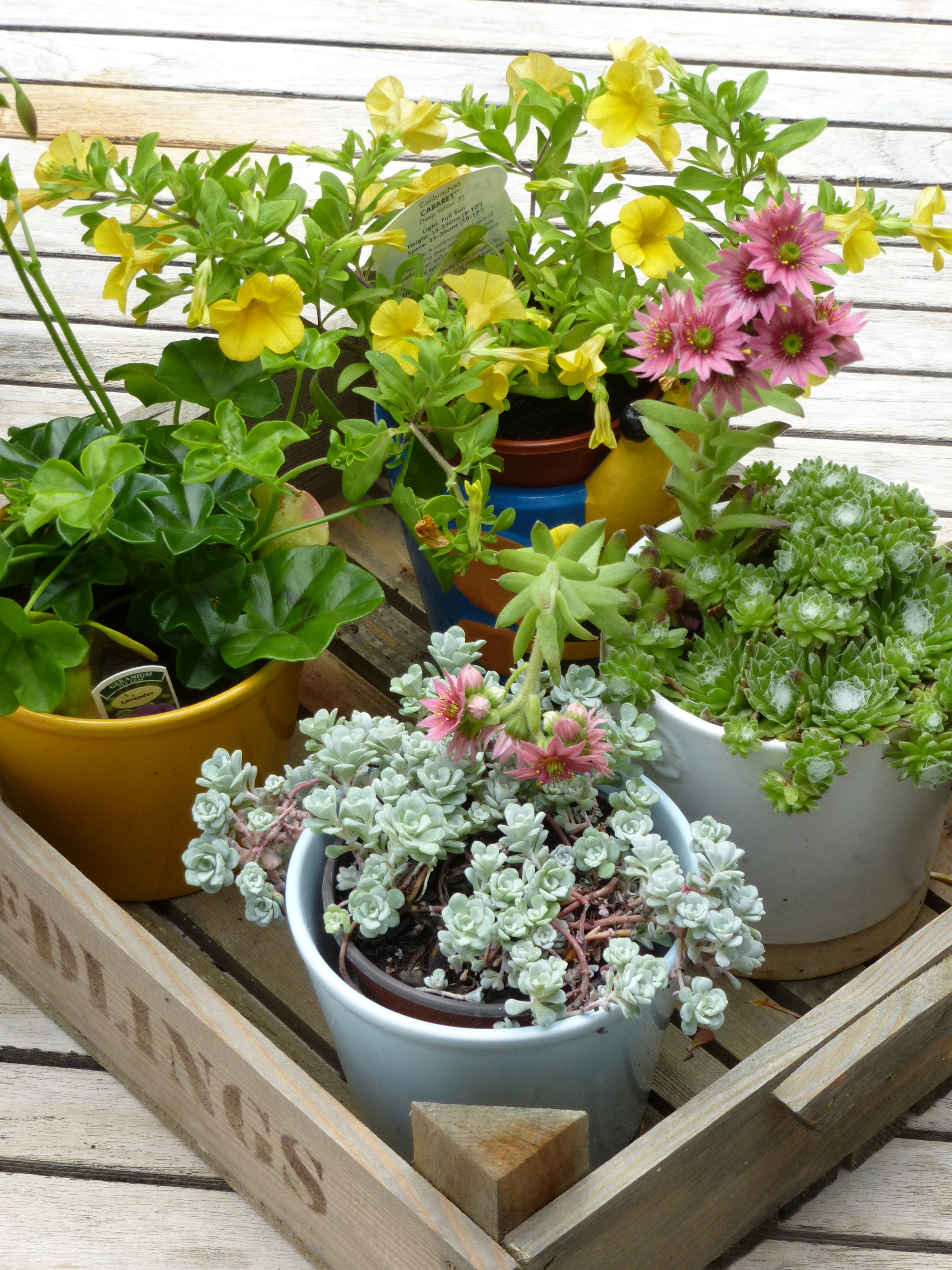 Free stock photo 12943 small crate of potted succulent plants and high angle still life of small crate of potted succulent plants and pink and yellow flowers mightylinksfo