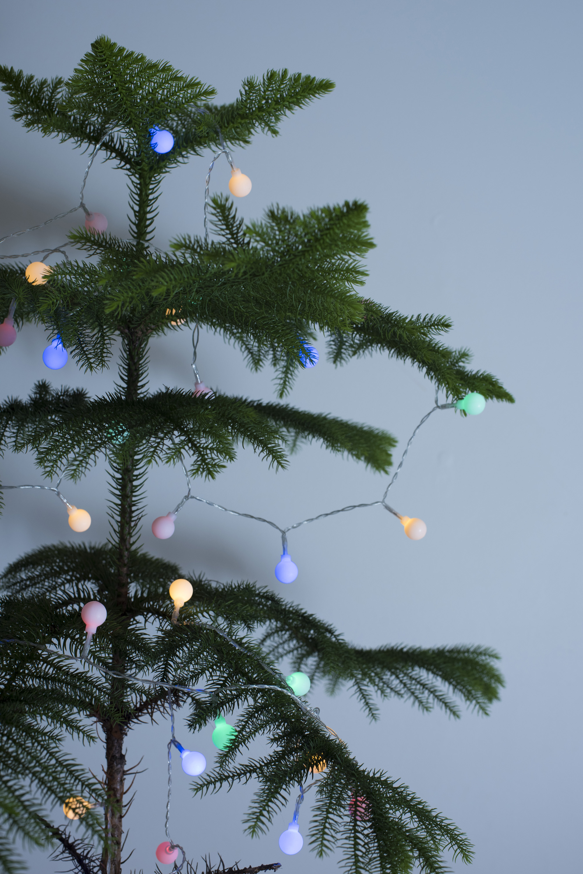 Free Stock Photo 13146 Natural Pine Christmas Tree With Simple Lights Freeimageslive