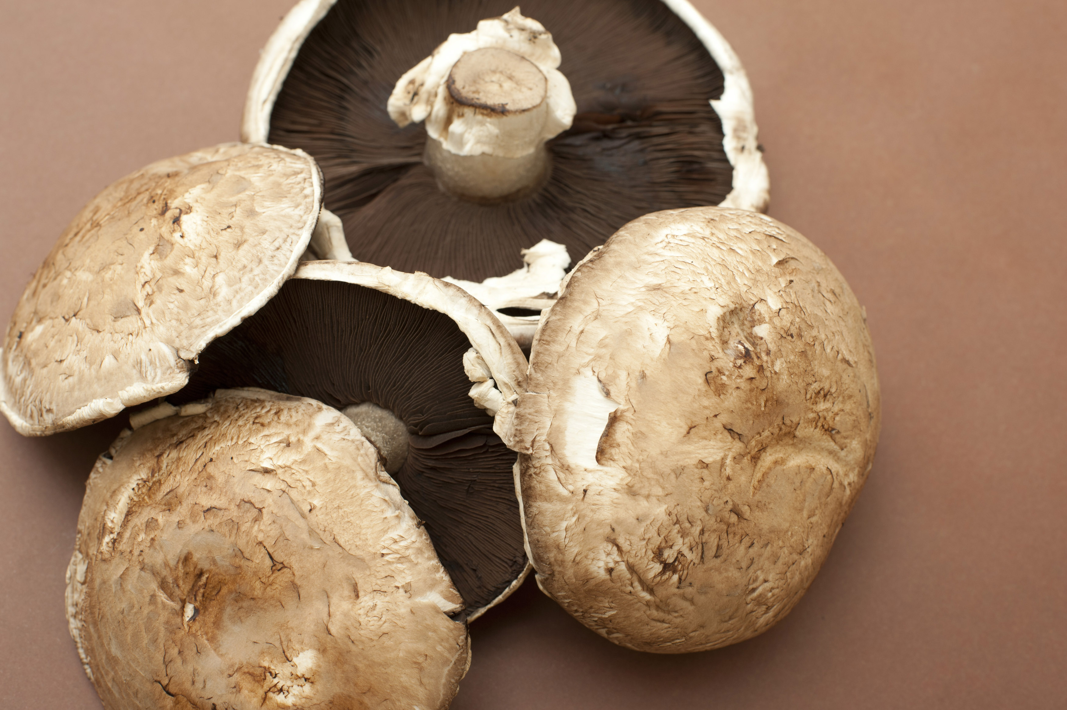 Free Stock Photo 17244 Large Fresh Raw Portobello Mushrooms Freeimageslive