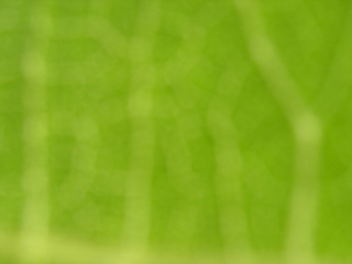 Green Background Free Stock Photo - Public Domain Pictures