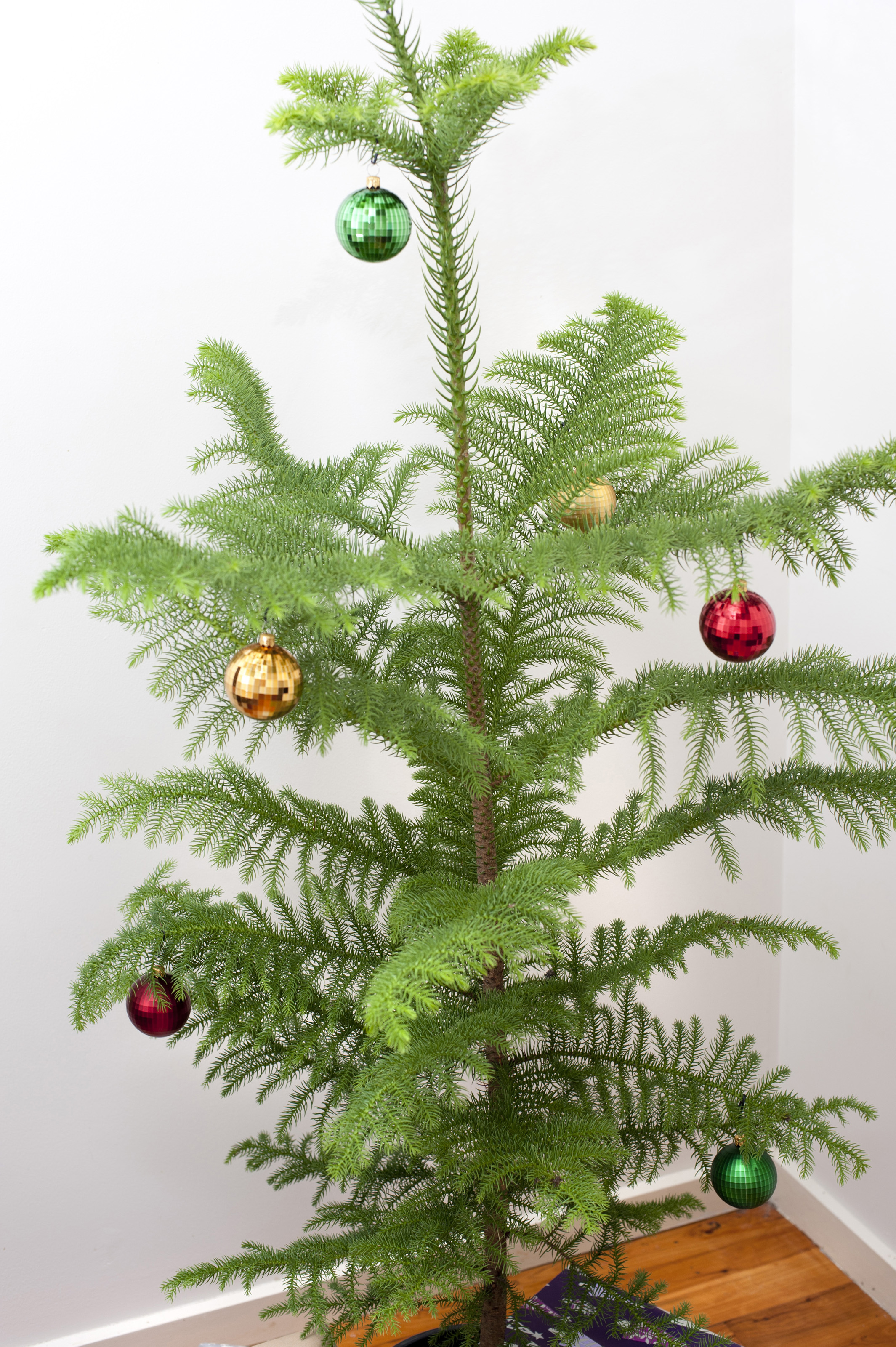 Free Stock Photo 8667 Real Christmas Tree With Colourful Baubles